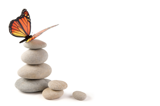 butterfly and rocks